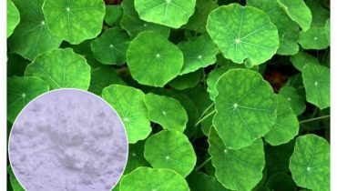 Centella Asiatica Extract là chất gì? Có công dụng gì trong mỹ phẩm?